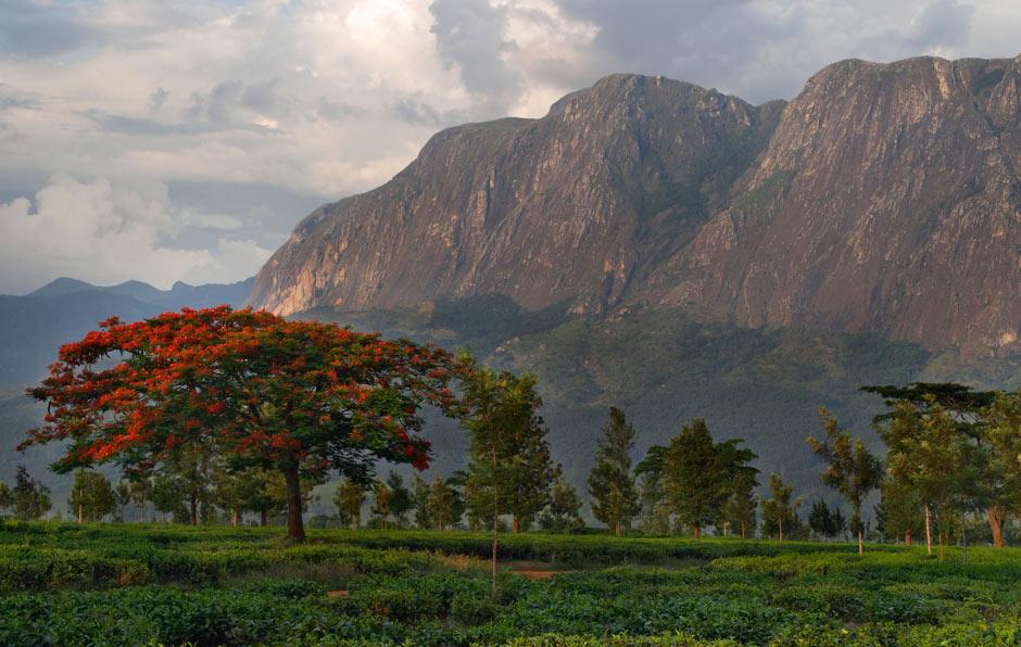 Mount-Mulanje