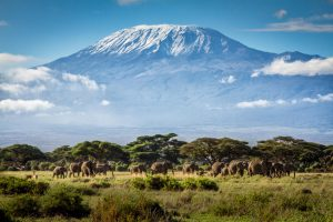 Climbing Kilimanjaro Guide