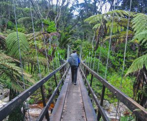 Heaphy_Track_Bridge